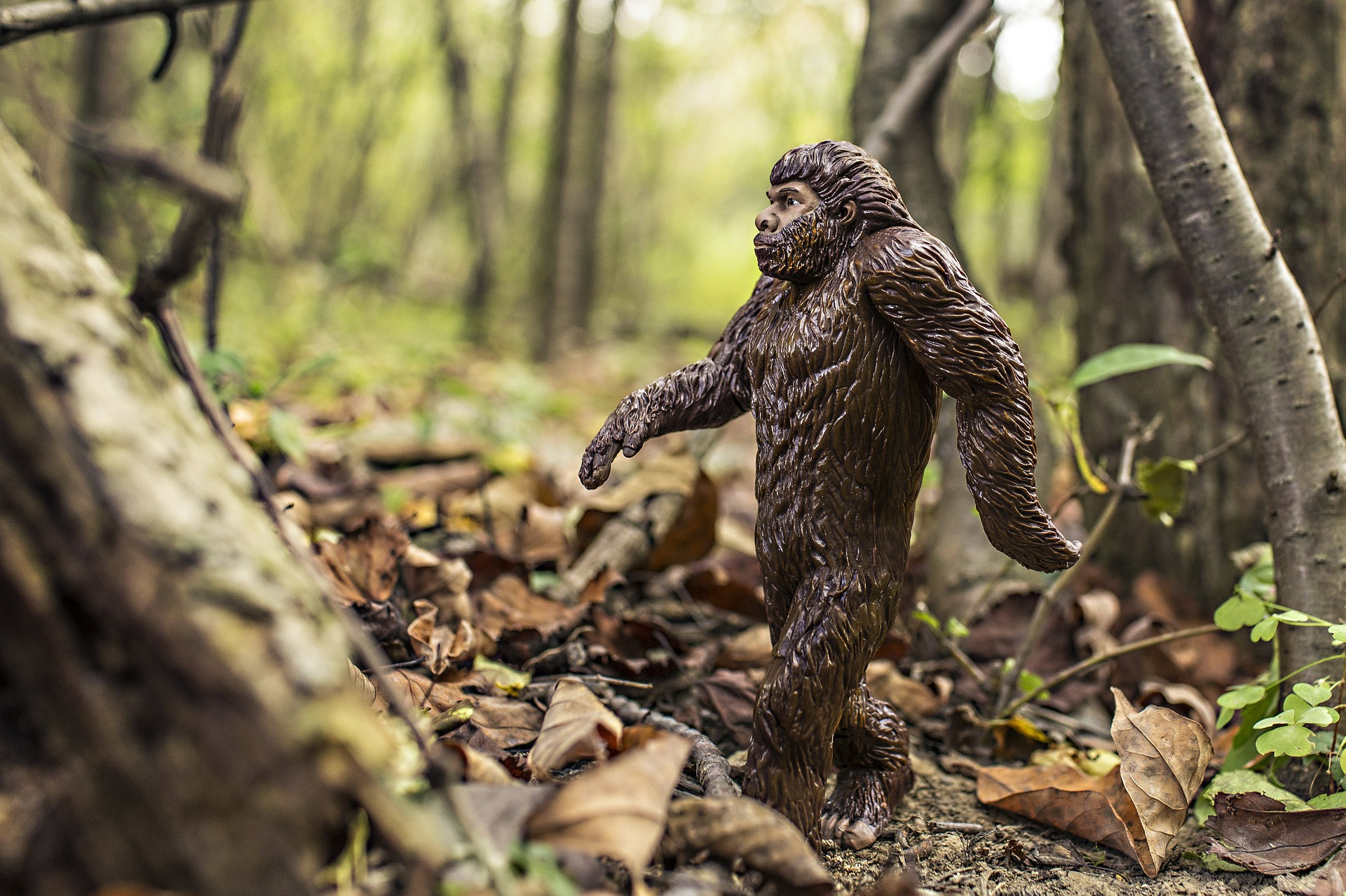 Elusive Bigfoot